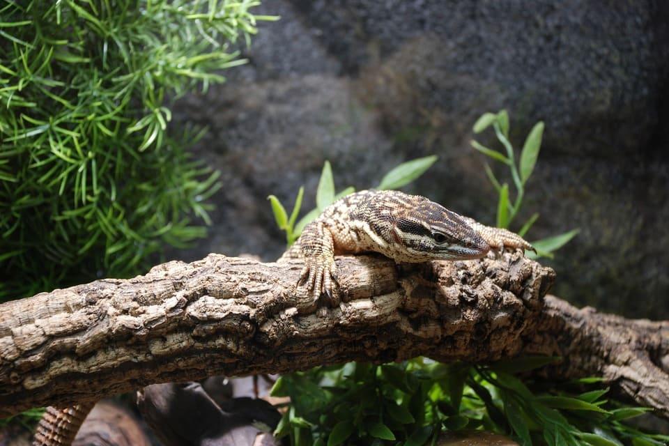 accessoires-pour-reptiles
