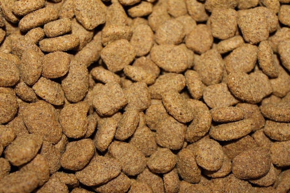 nourriture-pour-chiens-et-chats